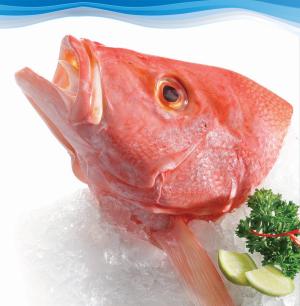 Jual Seafood Segar Bekasi
